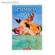 """Календарь перекидной, пружина """"Символ года - 1"""" 2019 год, 17х25см   3543642"""
